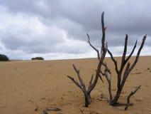 Desierto muerto del árbol Imagen de archivo libre de regalías