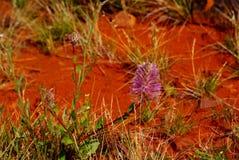 Desierto Mulla Mullas Fotografía de archivo libre de regalías