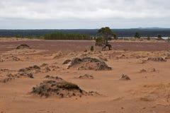 Desierto norteño Fotos de archivo libres de regalías