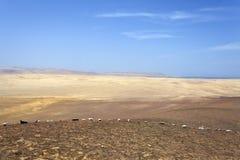 Desierto - parque nacional de Reserva National de Paracas en AIC Perú, Suramérica Imágenes de archivo libres de regalías