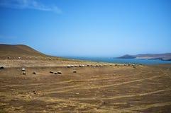 Desierto - parque nacional de Reserva National de Paracas en AIC Perú, Suramérica Foto de archivo