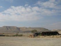 Desierto por el mar muerto Israel del tht Foto de archivo libre de regalías