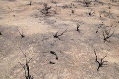 Desierto quemado fotografía de archivo