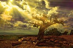 Desierto rocoso Fotografía de archivo