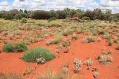 Desierto rojo con las plantas florecientes Foto de archivo