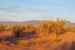 Desierto rojo de la arena con el arbusto en luz de la puesta del sol Fotografía de archivo