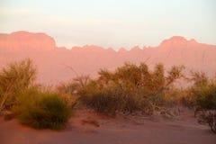 Desierto rojo de la arena con el arbusto en luz de la puesta del sol Foto de archivo libre de regalías