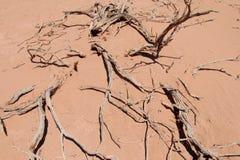 Desierto rojo de la arena con el arbusto muerto Foto de archivo libre de regalías