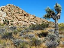 Desierto rojo de la barranca de la roca Imagen de archivo libre de regalías