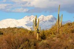 Desierto, Saguaros y nieve en las montañas detrás. Imagen de archivo