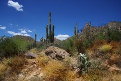 Desierto Ssring imagenes de archivo