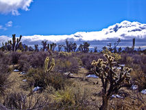 Desierto surrealista Imagenes de archivo