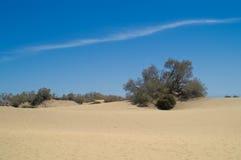 Desierto y árbol Foto de archivo libre de regalías