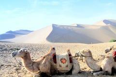 Desierto y camello Imágenes de archivo libres de regalías