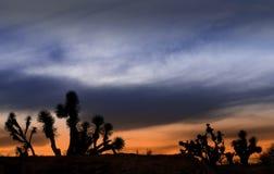 Desierto Zacatecano Foto de archivo libre de regalías