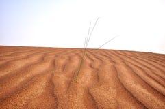 Desiertos de los UAE fotos de archivo libres de regalías