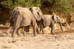 Desiertos y naturaleza del elefante del desierto en parques nacionales imagenes de archivo