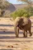 Desiertos y naturaleza del elefante del desierto en parques nacionales imágenes de archivo libres de regalías