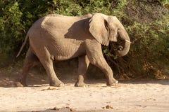 Desiertos y naturaleza del elefante del desierto en parques nacionales fotos de archivo libres de regalías