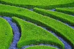 Desig del arbusto y de la flor fotografía de archivo libre de regalías