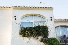 Design, architecture and exterior concept - Large window with plants on the white facade.  stock image