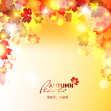 Design autumn vector frame. Natural vector vector illustration of beautiful autumn background with sun rays and maple leaves Royalty Free Stock Photography