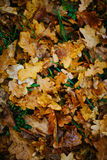 Design background with autumn recent colorful leaves Stock Photo