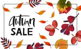 Design of banner Autumn Sale Lettering with leaves royalty free stock photography