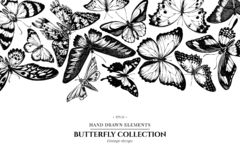 Design with black and white morpho menelaus, cethosia biblis, papilio antimachus, alcides agathyrsus, ornithoptera