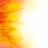 Design Border of  Autumn color dry Leaves  on white background Stock Photos