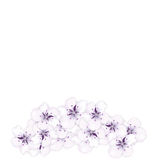 Design bottom frame blossoming bouquet sakura Royalty Free Stock Images