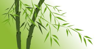 Design of chinese bamboo trees Stock Images