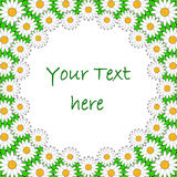Design colorful chamomile background for text. Flo Royalty Free Stock Images