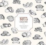 Design d'emballage Nuts Vecteur illustration de vecteur