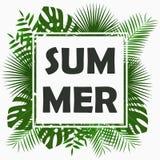 Design de carte d'été avec - les palmettes tropicales, la feuille de jungle, les usines exotiques et le cadre de frontière Graphi Image libre de droits
