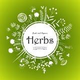 Design de carte d'herbes Photo stock