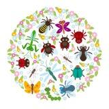 Design de carte dans les coccinelles drôles d'une guêpe de scarabée de mante de libellule de papillon d'araignée d'insectes de ce illustration libre de droits