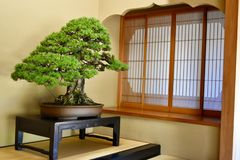 Design de interiores japonês da arte foto de stock