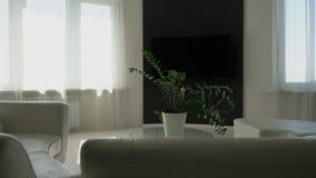 Design de interiores minimalista moderno com uma planta na tabela no meio da sala