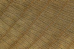 Design of dry leaf texture for pattern and background Stock Photography