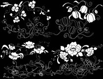 Design element on a black background. White design element flowers on a black background Royalty Free Stock Photography