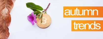 Design elements for autumn. Cover image for autumn. Bitcoin and pink flower with fall leaves in the corner Stock Photography