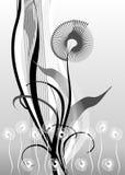 Design elements, floral. Vector design elements, floral, black, white, grey Stock Photography