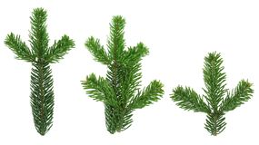 Design elements - isolated spruce twigs XXL image Stock Image