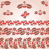 Design elements. rowan. Vintage Design Elements.  bunch red rowan and leaf Royalty Free Stock Photo