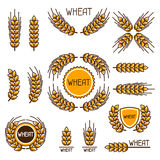 Design elements with wheat. Agricultural image natural ears of barley or rye.  Royalty Free Stock Images