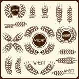 Design elements with wheat. Agricultural image natural ears of barley or rye Royalty Free Stock Photos