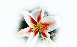 Design för bakgrund för Alstromeria blomma abstrakt texturerad, illustration arkivfoto