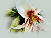 Design för bakgrund för Alstromeria blomma abstrakt texturerad, illustration royaltyfri foto