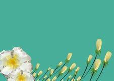 Design för bakgrund för vektorillustration blom- Royaltyfri Foto